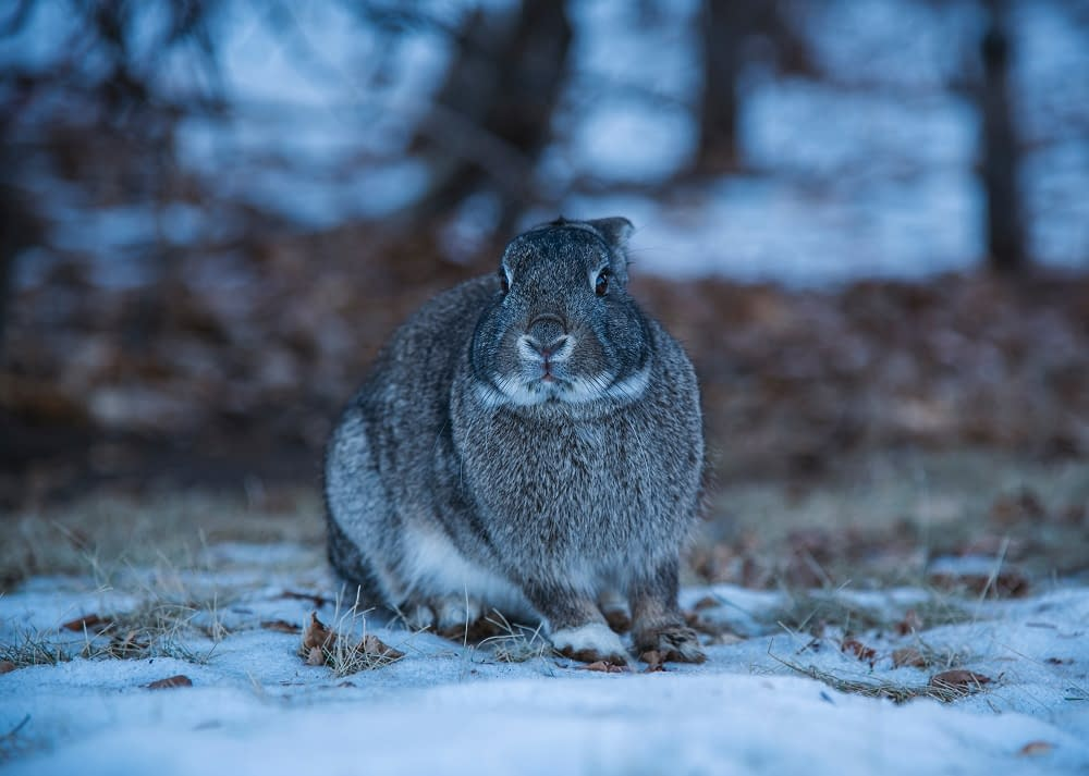 7 easy ways you can help wildlife this winter | Pigments by Liv