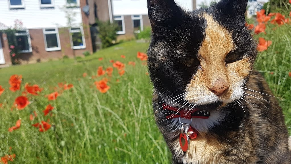 Izzy adopted rescue Tortishell cat | Pigments by Liv