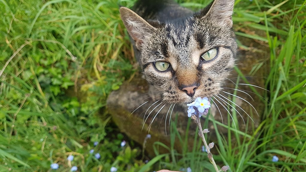 Jynx adopted rescue tabby cat | Pigments by Liv