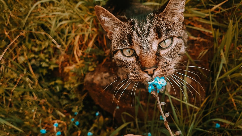 Jynx | Summer Reading: 4 Books for Cat Lovers | Pigments by Liv