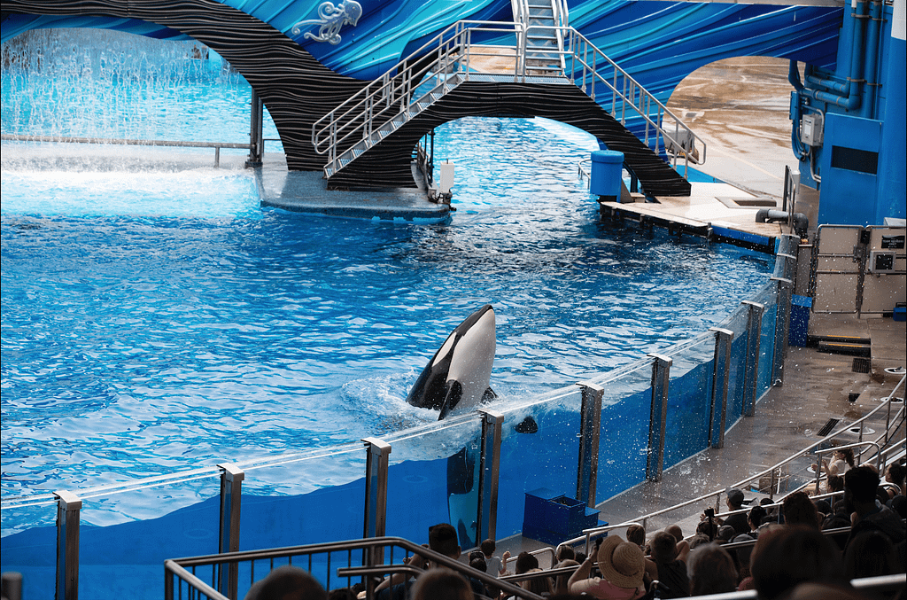 Orca Captivity | Media by mads | Chats with Conservationists | Whale and Dolphin Captivity