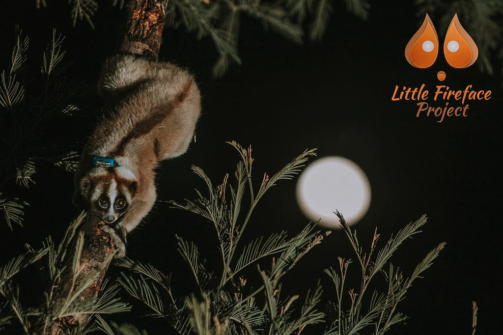 Slow Loris Collection | Pigments by Liv