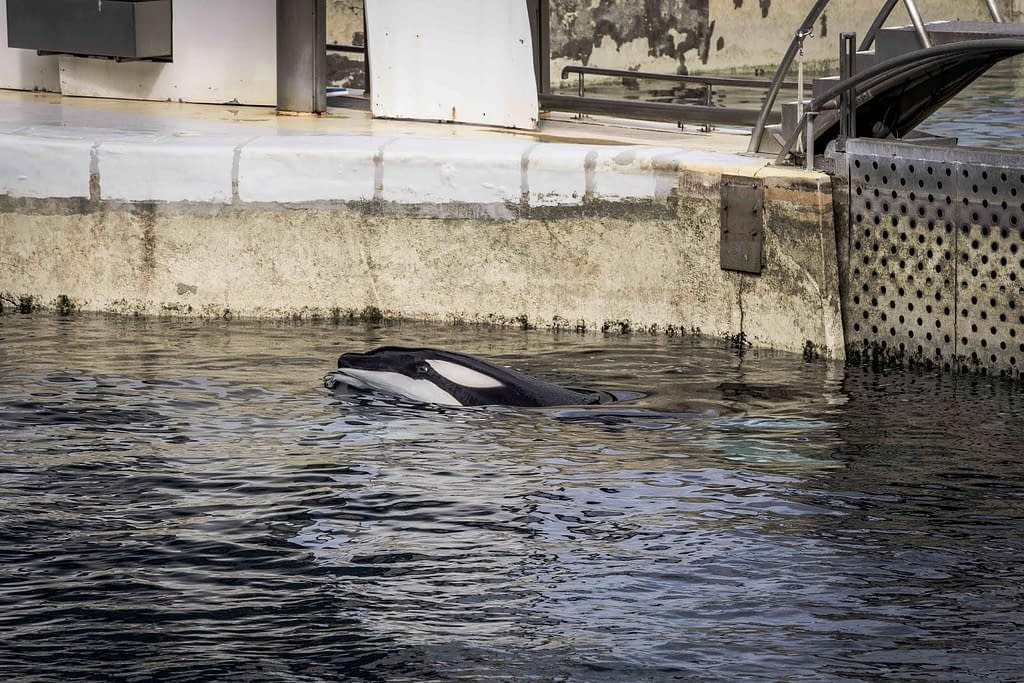 End Whale and Dolphin Captivity | Media by mads | Chats with Conservationists | Whale and Dolphin Captivity