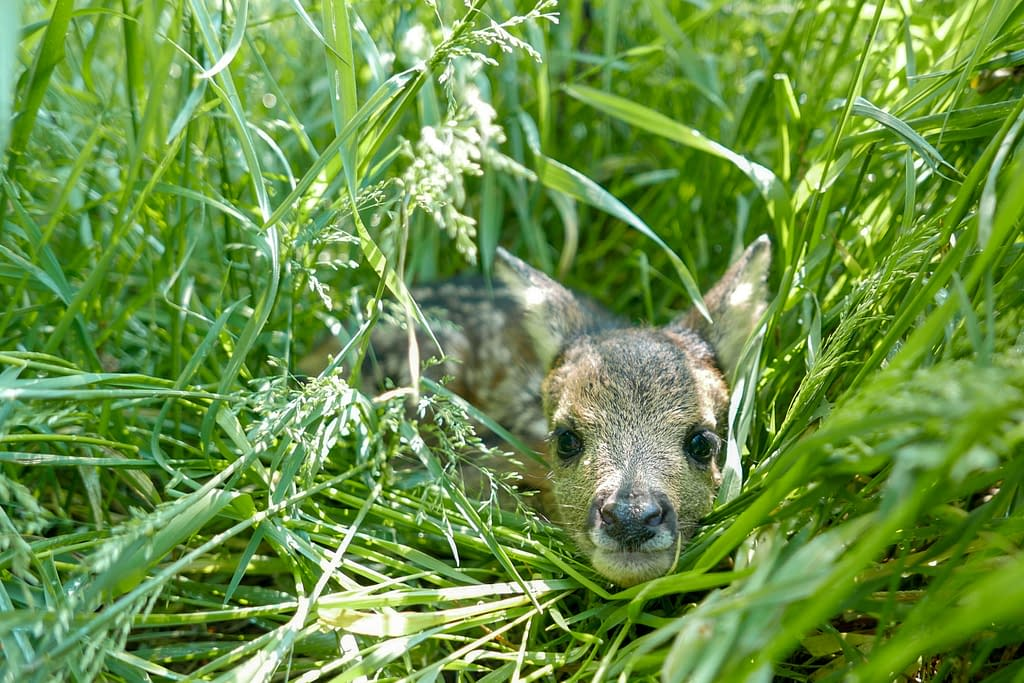 Rescuing baby animals   How to help local wildlife in Spring   Pigments by Liv