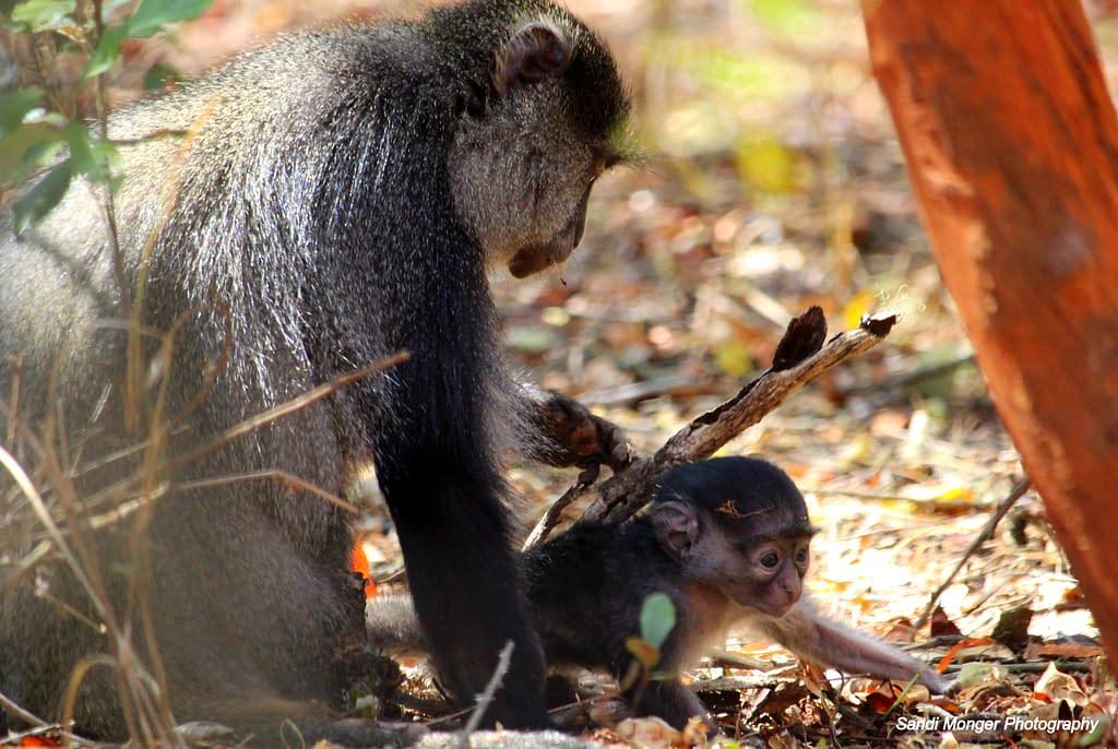 Primate and predator project