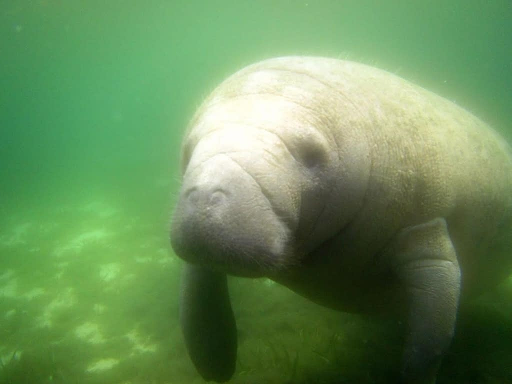 Swimming with Manatees   So you want to be a zoo keeper? Chats with Conservationists: Sophie   Pigments by Liv