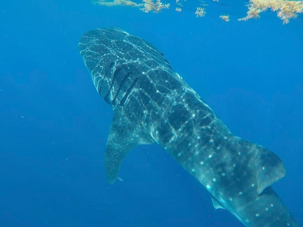 Swimming with Whale Sharks   So you want to be a zoo keeper? Chats with Conservationists: Sophie   Pigments by Liv