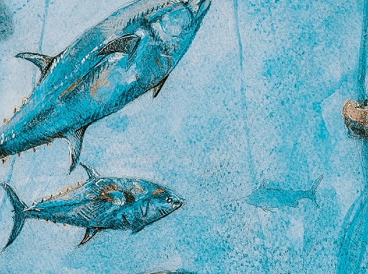 Bycatch and bluefin tuna conservation   Pigments by Liv