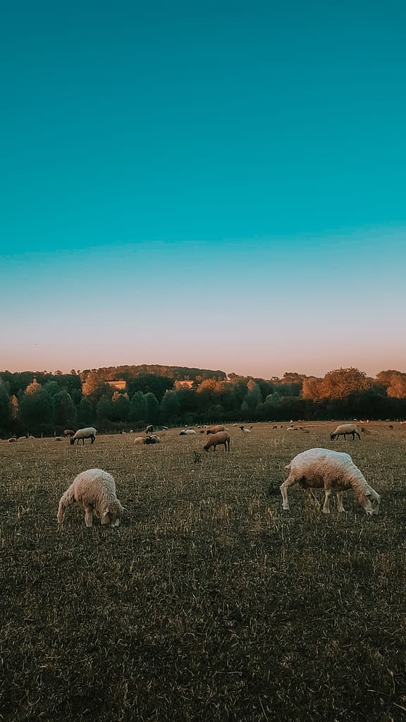 Suffolk | Pigments by Liv