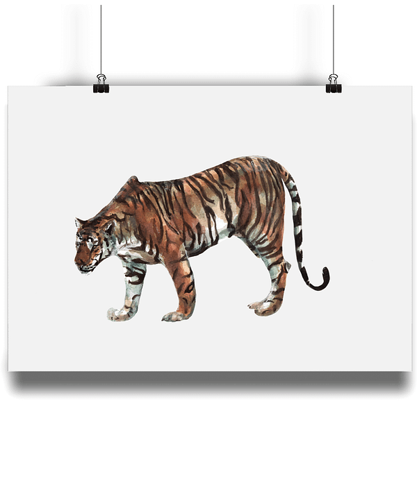 Limited Edition Tiger Art Print | Pigments by Liv