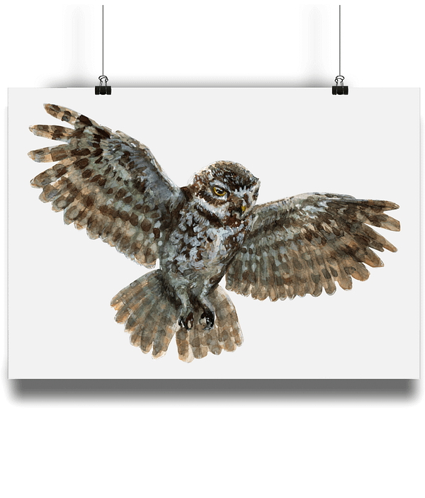 Owl Art Print   Pigments by Liv