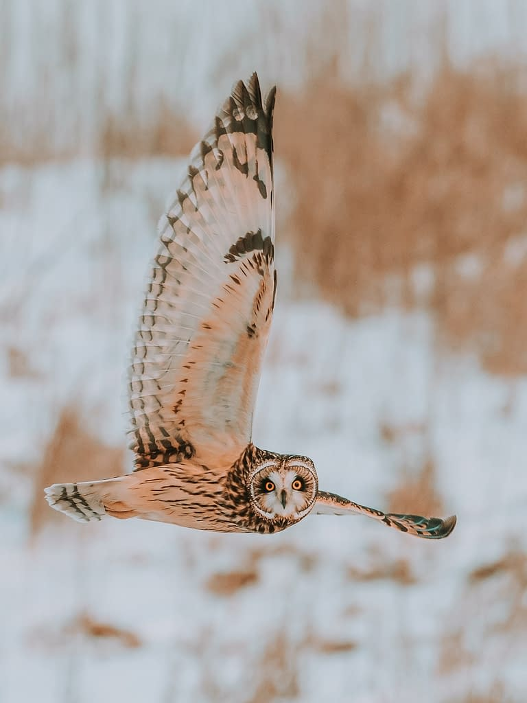 The importance of Owl Conservation | Pigments by Liv