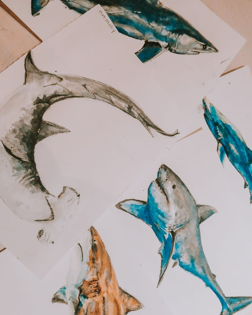 How do we stop shark finning | Behind the Shark Collection | Pigments by Liv