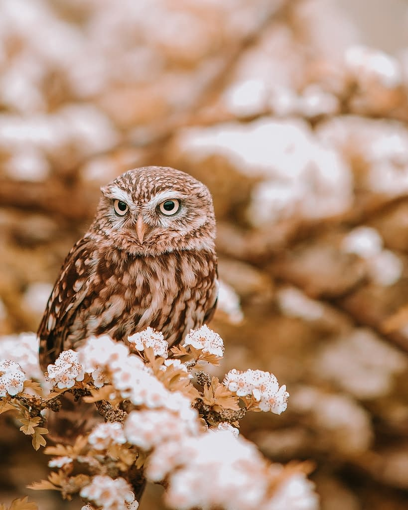 Owl Conservation | Pigments by Liv