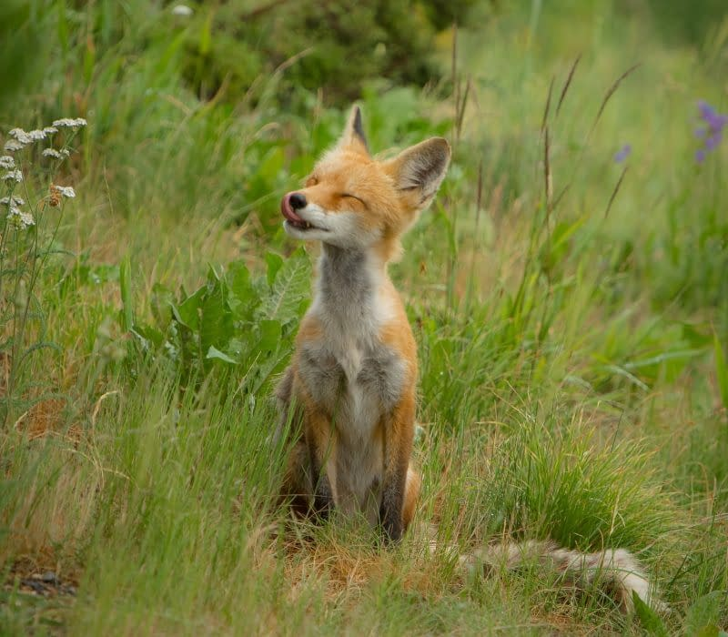 Baby animals   How to help local wildlife in Spring   Pigments by Liv